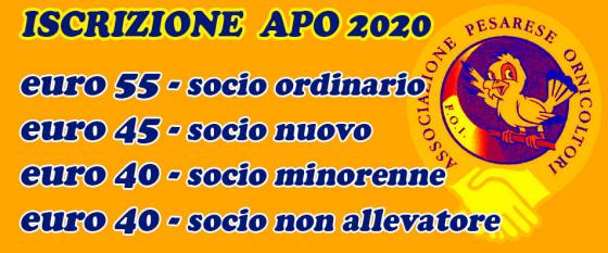 nuovo concetto scegli originale Super carino APO Pesaro